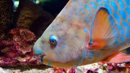 Los arrecifes artificiales son estructuras submarinas creadas por el hombre, construidas para promover la vida marina (Pixabay)