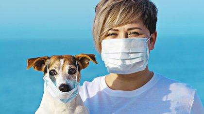 Creció con la pandemia el interés de las personas en adoptar perros y gatos (Shutterstock)