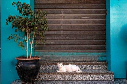 Un gato blanco descansa en Marruecos durante el brote de COVID-19