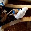 Las imágenes del maltrato animal fueron captadas con una cámara oculta (Foto: Equila)