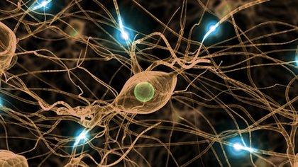 Los psicodélicos lo que hacen es generar una disrupción en el cerebro (YouTube)