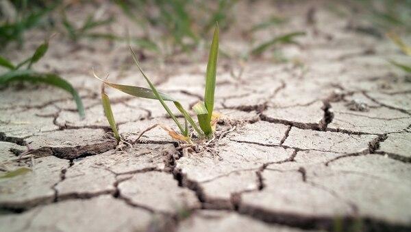 Bayer continuará los trabajos comenzados por Monsanto sobre genes contra la sequía. (Getty Images)
