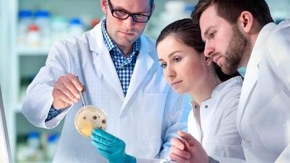 En noviembre de 2017, la OMS señaló que si se restringe el uso de los antibióticos en animales para el consumo humano, se reduce el desarrollo de la resistencia hasta en un 39 %. (iStock)