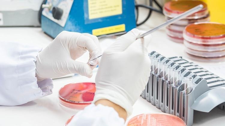 La resistencia del organismo a la acción de los fármacos está en relación con el uso de los mismos en la industria agropecuaria (Getty)