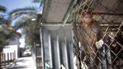 La ONG Four Paws se hizo cargo de los 15 ejemplares que quedaban vivos para sacarlos del empobrecido y aislado enclave palestino (AP)