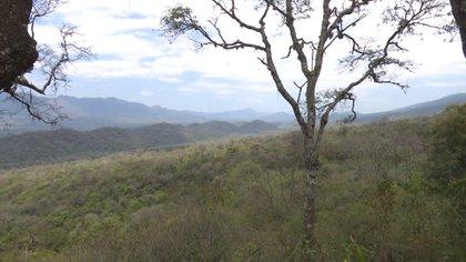 El 43% de la pérdida de bosques nativos fue durante la vigencia de la ley 26.331, conocida como Ley de Bosques y sancionada en 2007