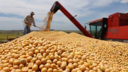 Los desperdicios, según los expertos, se dan en toda la cadena de producción de alimentos.