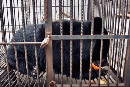 El oso encontró un nuevo hogar, pero conserva su apetito voraz por las frutas