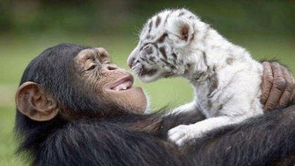 Miles de vínculos afectivos se gestan entre especies, lo que facilita el desarrollo evolutivo de los animales en el planeta
