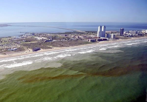 Laproliferación descontrolada de las algas tóxicas es la mayor desde 2006 (NOAA)