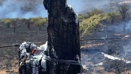 El rancho de Pepe Aguilar se vio fuertemente afectado luego de que un incendio dañara 1.300 hectáreas de su terreno (Foto: IG @pepeaguilar_oficial)