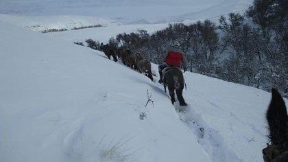 El histórico fenómeno climático adverso ocurre en un contexto de una profunda crisis para el sector ovino, que ya venía afectado por la situación del coronavirus