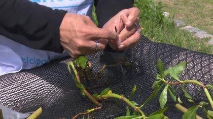 La acción conjunta entre profesionales, funcionarios y vecinos está logrando reconstituir parte de su flora y la fauna nativa