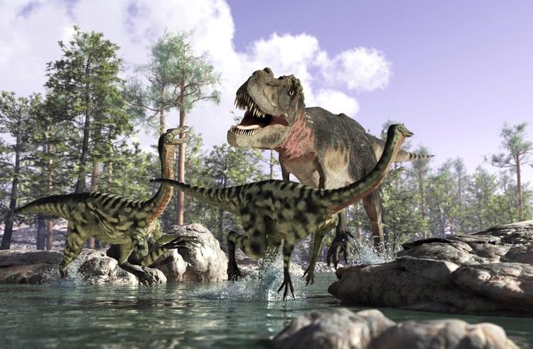 Se cree que la nueva especia es un tipo de tiranosaurio, aunque no se trata del precedesor del T-Rex sino de una evolución en paralelo (Istock)