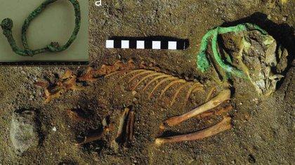 Restos de una macosta que aún conservaba su collar en el cementerio de animales más grande y antiguo del mundo hallado en Egipto (Europa Press)