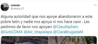 Le 18 février, ils ont signalé en ligne l'apparition du cadavre du félin (Photo: capture d'écran Twitter)
