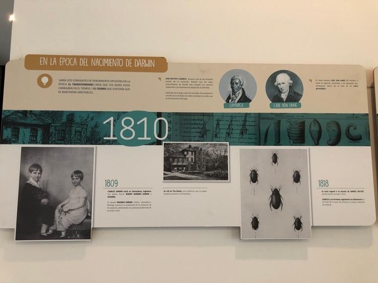 Muestra de Charles Darwin exhibida este invierno en el Museo Municipal de Ciencias Naturales de Mar del Plata