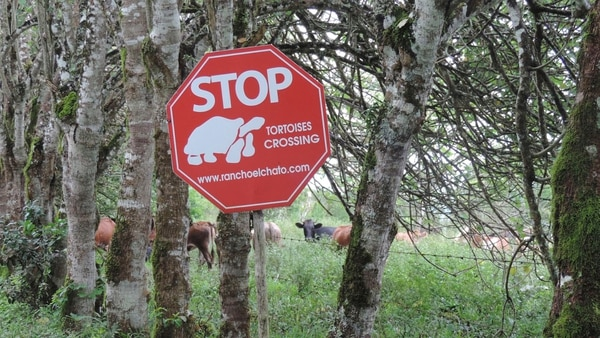 El tránsito por las islas tiene señales muy particulares, como las que contemplan a las tortugas a la hora de cruzar caminos y o puentes