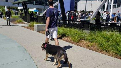 Los empleados pueden llevar sus mascotas al trabajo siempre y cuando se hagan responsable por ellas todo el tiempo que están en el complejo.