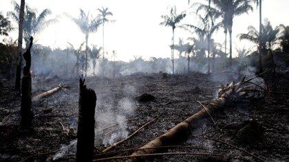 El científico Paulo Moutinho, del IPAM, un organismo de investigación amazónico, dio la razones por las que se propaga el fuego (Reuters)