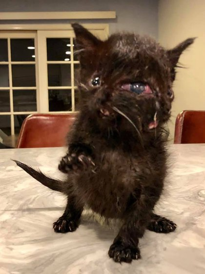 Dúo nació con un defecto congénito que pone en riesgo su vida (Foto: Facebook Ralph Tran)