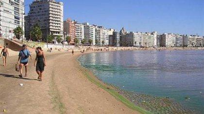 Las playas tienen unas manchas verdes en sus orillas