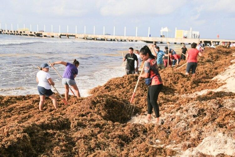 La macroalga que llega a las costas del Caribe Mexicano. (FOTO: ELIZABETH RUIZ /CUARTOSCURO.COM)