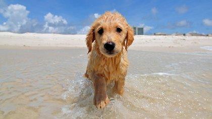 Los perros cuando son cachorros tienen una extraña relación con el agua (Shutterstock)