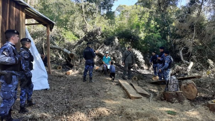 Crece el delito de la tala de árboles sin autorización en Misiones (Ecología Misiones)