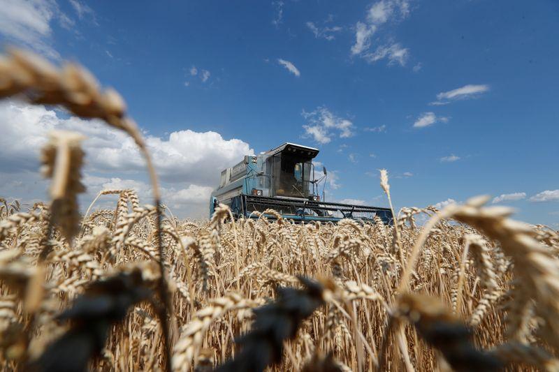 Imagen de archivo de la cosecha de trigo en un campo cercano a la localidad de Hrebeni, en la región de Kiev, Ucrania. 17 julio 2020. REUTERS/Valentyn Ogirenko