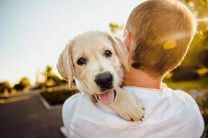 Las vacunas en los canes son muy importantes para evitar contagios. Foto: Pixabay