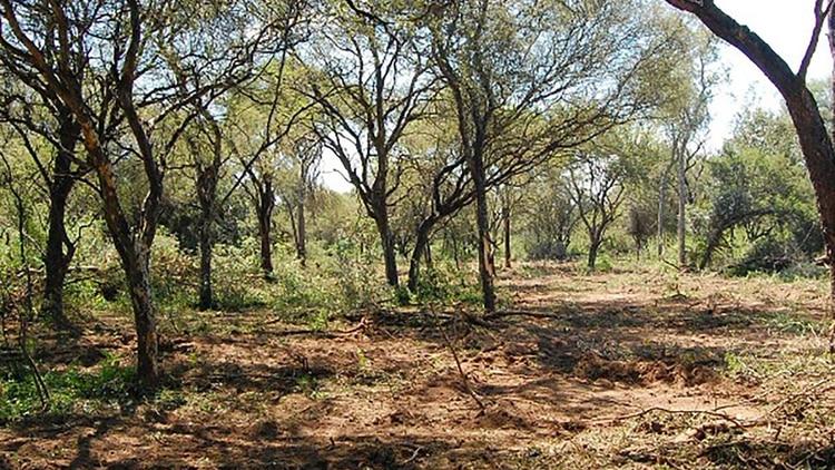 Campo de Cielo está ubicado en el límite entre las provincias de Chaco y Santiago del Estero (foto archivo: Wikipedia)