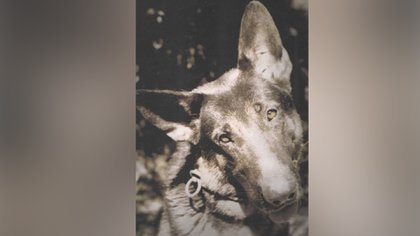 Desde 1996, cada 2 de junio se celebra el Día Nacional del Perro
