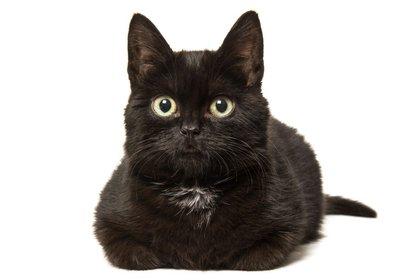 Los gatos también saben protegerse del frío (iStock)