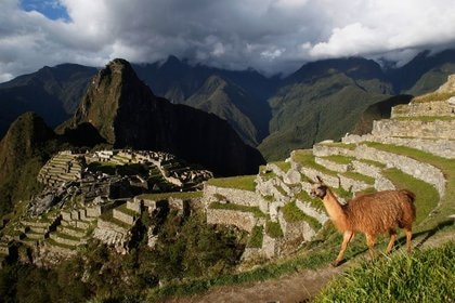 IMAGEN DE ARCHIVO. Una llama se ve cerca de la ciudadela Inca de Machu Pichu, en Cusco, Perú, Diciembre 2, 2014. REUTERS/Enrique Castro-Mendivil