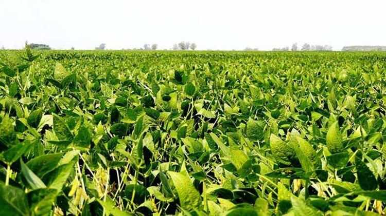 El año pasado las exportaciones de soja volvieron a mantener niveles altos, luego de un 2018 muy complicado por los efectos de la sequía
