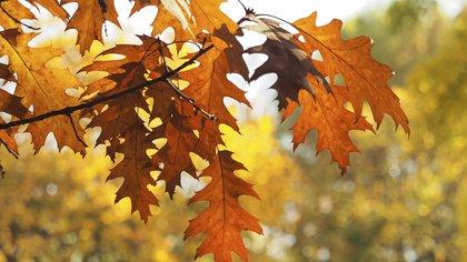Las hojas anaranjadas son un rasgo distintivo de otoño (Foto: Pxhere)