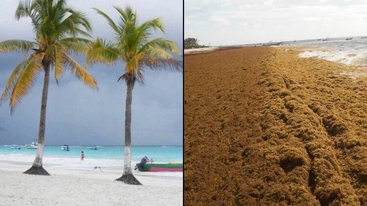 Hace 2 años no había sargazo y en la playa se veía la arena. El día de hoy hay sargazo (Foto: Twitter)