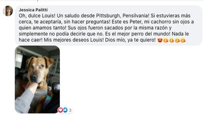 Usuarios de Facebook compartieron buenos deseos para Louis y mostraron las fotos de sus propias mascotas ciegas y lo bien que se adaptaron a su nueva vida