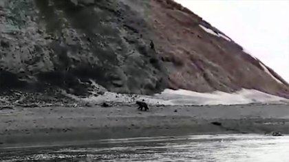 El hombre trató de escapar del oso
