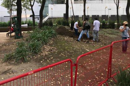 El Movimiento Cannabico Mexicano planea sembrar en las cinco jardineras del parque Louis Pasteur (Foto: Antonio San Juan/Infobae)