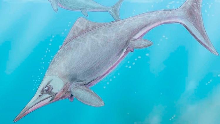 Resultado de imagen para reptil marino de 150 millones de años en la Patagonia