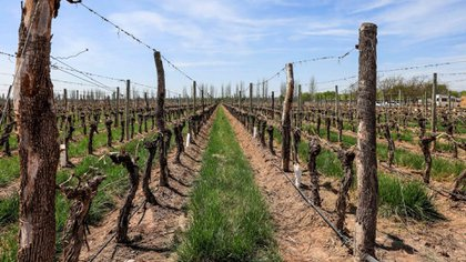 A pesar del COVID-19, los vinos se están vendiendo muy bien, sobre todo los de más alto valor