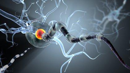 La ELA es una patología progresiva del sistema nervioso que afecta las células nerviosas en el cerebro y la médula espinal (Shutterstock)