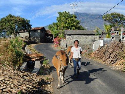 Una campesina evacua la zona cercana al volcán (AFP)