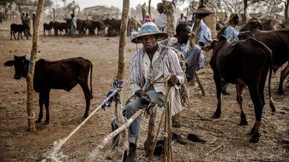 Un hombre fulani vende vacas en un mercado en Nigeria (AFP)
