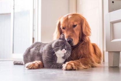 Recomendaciones para cuidar a las mascotas en la cuarentena en casa (Shutterstock)