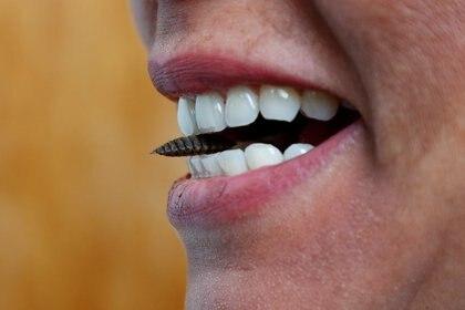 La Dra. Daylan Tzompa Sosa de la Universidad de Gante posa con una larva de mosca soldado negra entre sus dientes en la Universidad de Gante, Bélgica, 27 de febrero de 2020. Imagen de referencia. REUTERS / Francois Lenoir