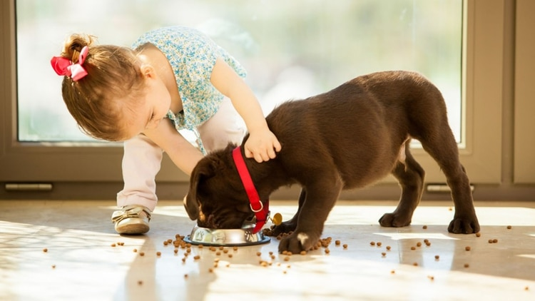 Los cachorros comen el equivalente a su peso corporal (Shutterstock)