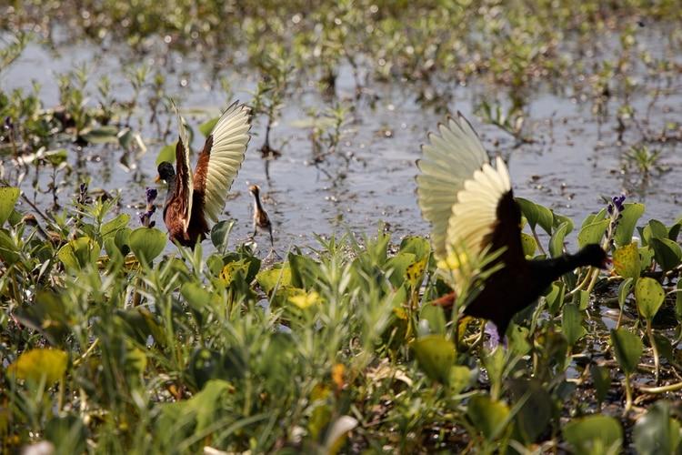 El pequeño pueblo de la provincia de Corrientes, cuenta con solo 1200 habitantes y está enclavado a orillas de la laguna Iberá. Es famoso por la abundancia y fácil avistaje de aves y vida silvestre a escasos metros de distancia. Algunas de las actividades destacadas para realizar dentro son los safaris en lancha, los safaris nocturnos, cabalgatas, avistaje de aves y caminatas por los distintos senderos